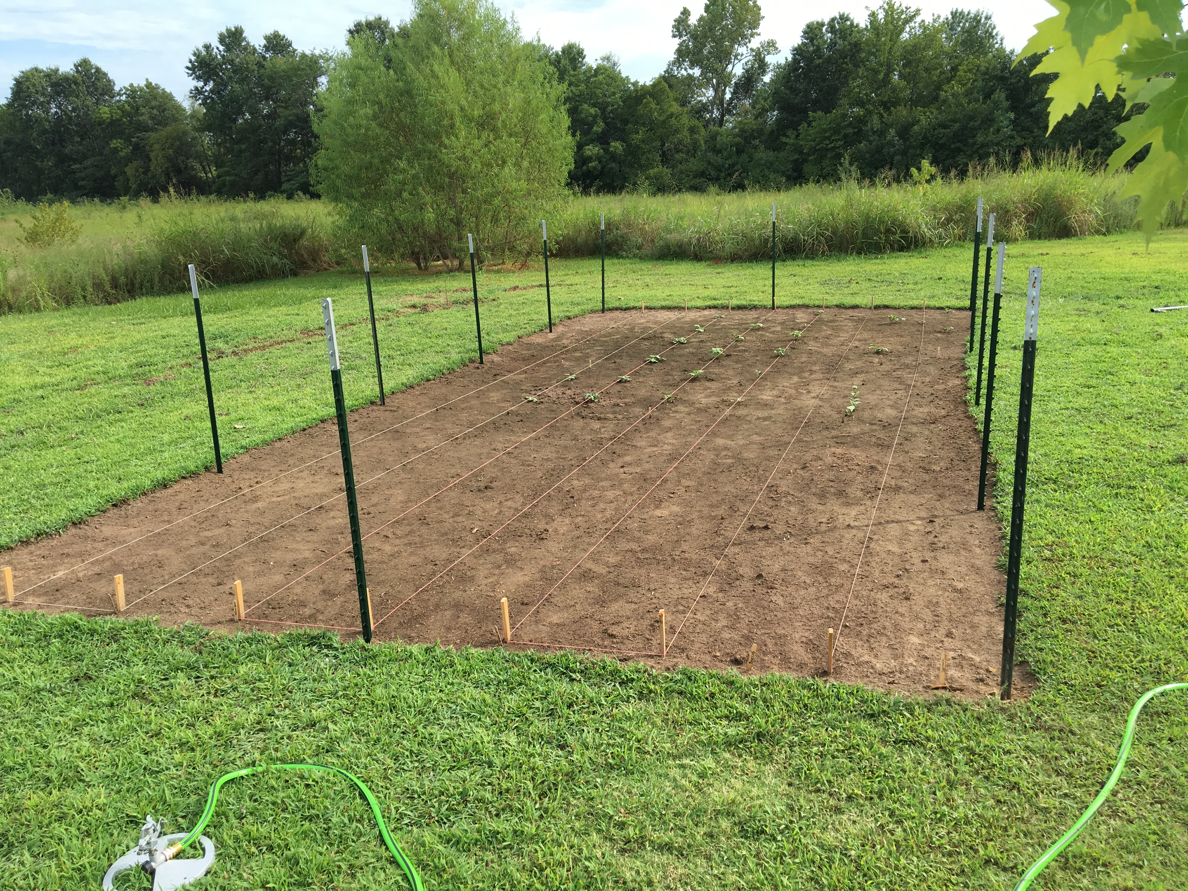How to Design, Build, and Grow a Vegetable Garden | Roses and Wrenches